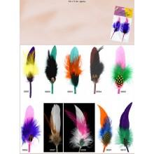 Par de plumas pequeñas,...